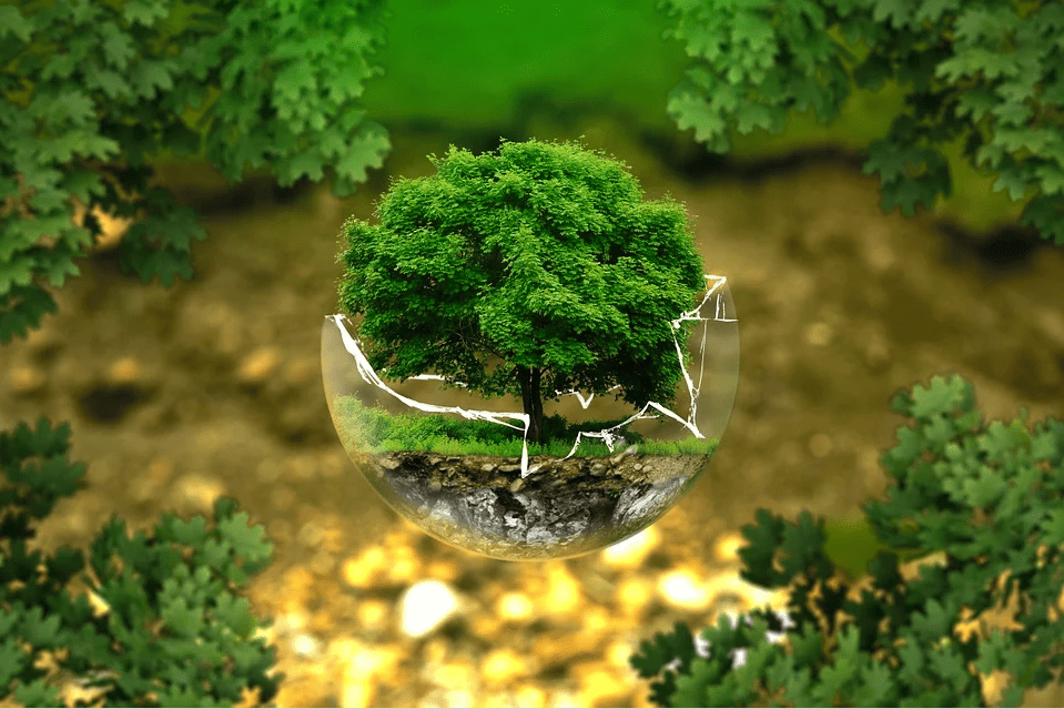 respect de l'environnement, tri et recyclage